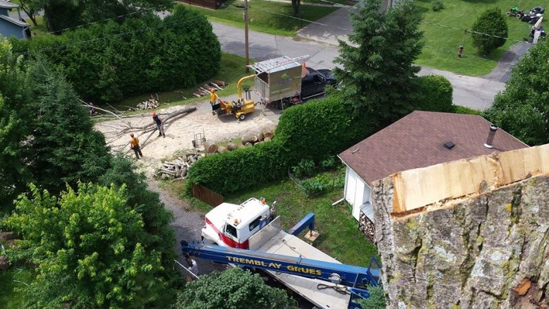 Photo de ARBO2 Services Arboricoles - Arbres Services